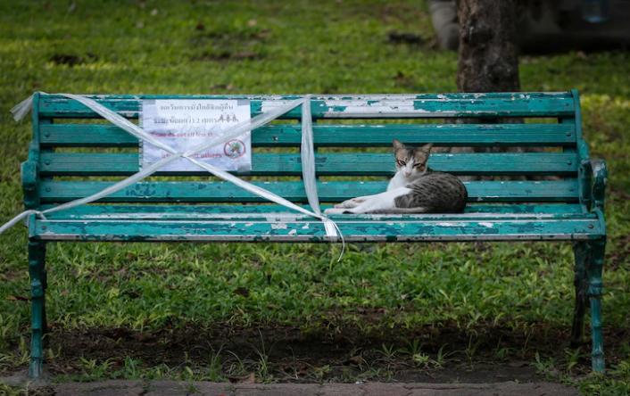 cat on bench